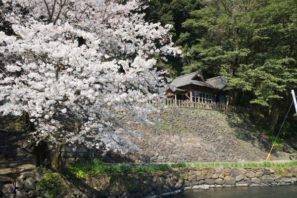 瀬田神社 大津町[阿蘇外輪山周辺 桜 名所・花見情報]