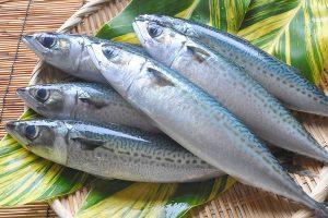 青魚は健康食[オメガ3(DHA / EPA・αリノレン酸)]