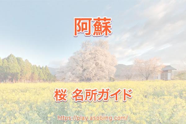 [阿蘇]桜の名所・お花見