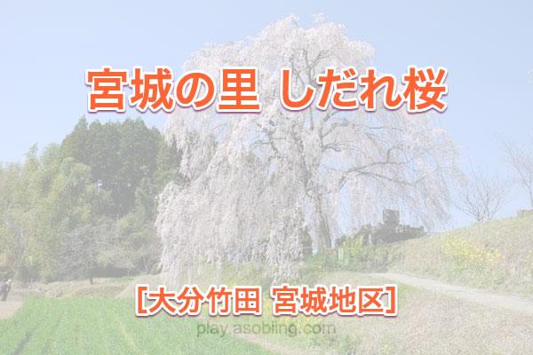宮城の里 しだれ桜[大分竹田市 宮城地区]
